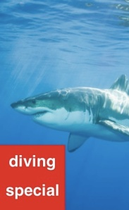 Great White Shark Diving Special