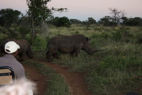 Rhino spotted on game drive at Phinda Private Game Reserve, Kruger National Park
