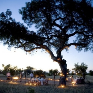 Dinner under the stars at Ngala Safari Lodge