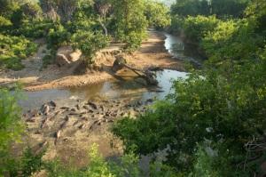 Hippo pool, Beho Beho