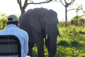 Elephant up close, Londolozi