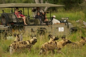 Khwai is one of the best places in Africa to see Wild Dog